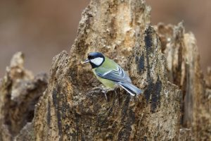 Wild about Birds @ Normanby Hall